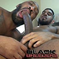 'Visit 'Black Breeders''