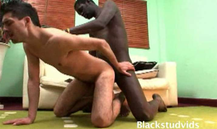 Black Stud Vids Video